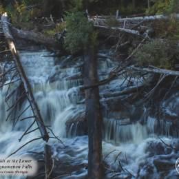 Rapids-Lower-Tahquamenon-IMG_7507